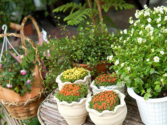 ハチの巣がなくなればお庭でガーデニングを楽しむことも出来ます!